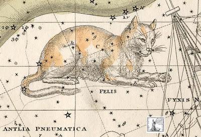 Constellation Felis - A Drunken Ode to Cats