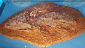 Os seres vivos atuais, os fósseis e árvores filogenéticas