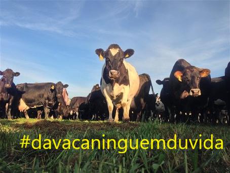 Na vaca todo mundo confia