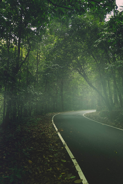 mizoram beautiful roads through the forest