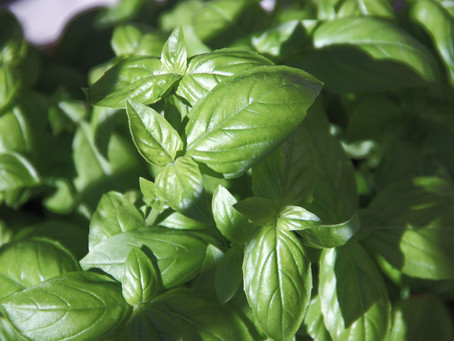 Basil Bounce Recipe - Jason Diamond