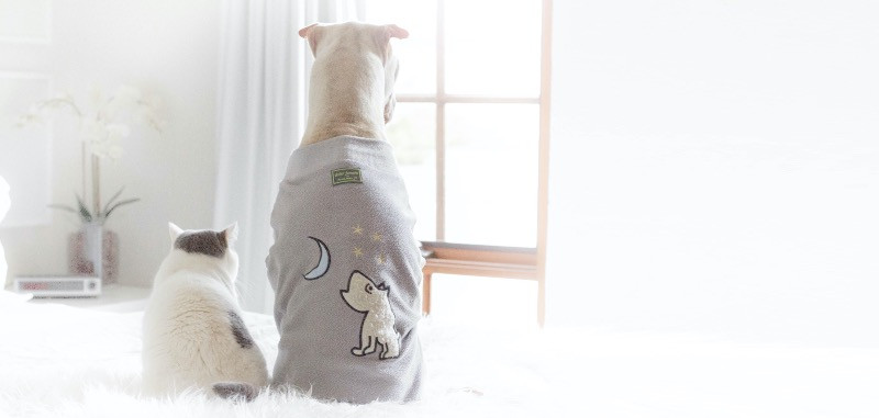 pets in pyjamas on a bed