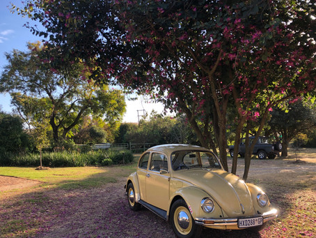 Pam; our 1974 VW Beetle