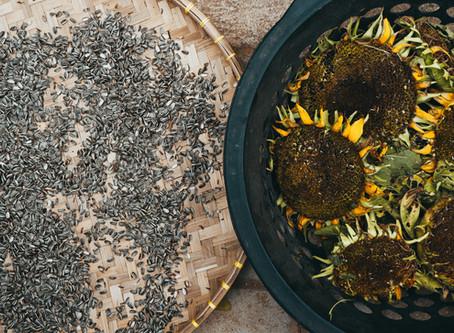 Sunflower & Pumpkin Seed Spread