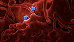 Binance Donates $1.5m for Coronavirus Victims