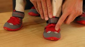 Grip Trex Dog Boots – Reflective Trim