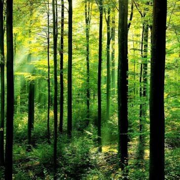 Forêts domaniales d'Ile-de-France: Pour une exploitation durable