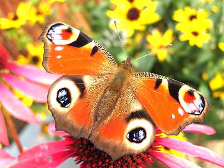 Finde-Spiel 15: Finde Schmetterlinge