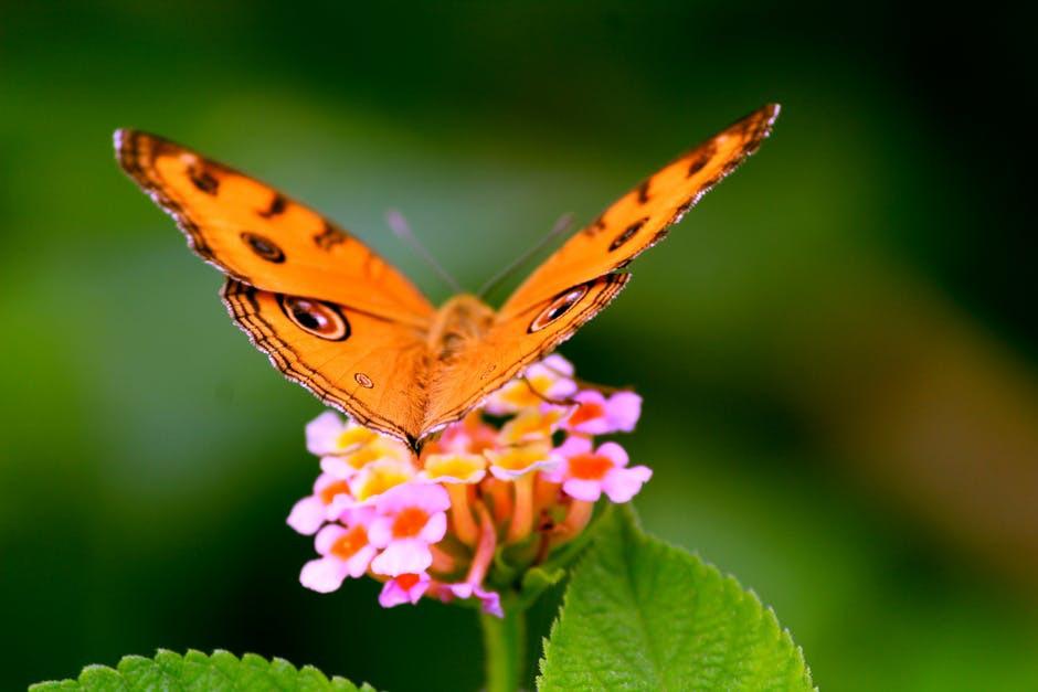 mariposa, cambio, oruga, trasformación, sé el jefe, hectorrc.com