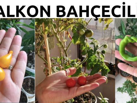 Balkon bahçeciliği, şehirde minik kaçışlar