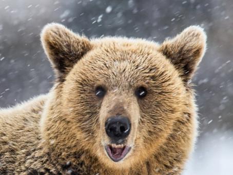 Hibernation is for bears.