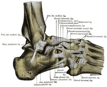 Ankle Injuries - Midfoot Sprain