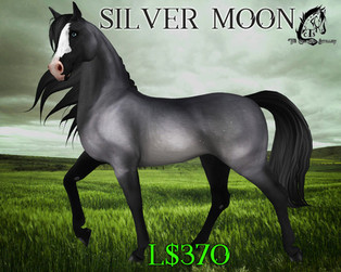 The Celtique Stallion - Coat Textures