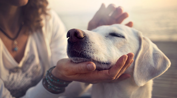 Does My Dog Like to be Petted - Petdiary Dog Training Collars