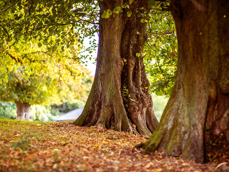 A guide to...Autumn Gardening Jobs