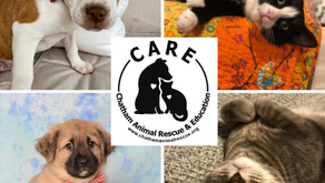 Chatham County, here is a group who CAREs about your animals!