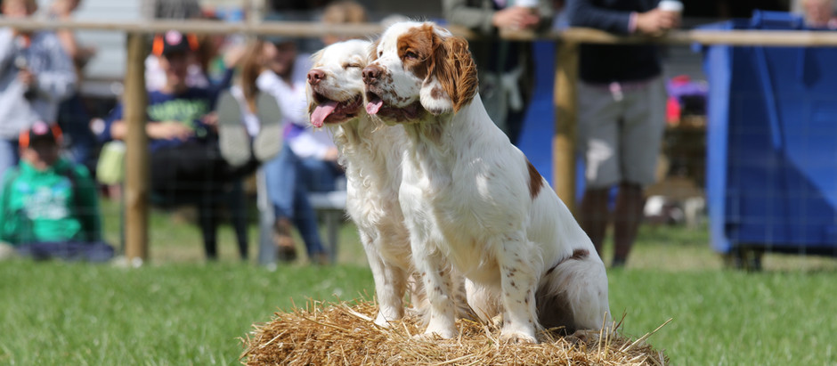 The Game Fair 2019 at Hatfield house 26-28 July