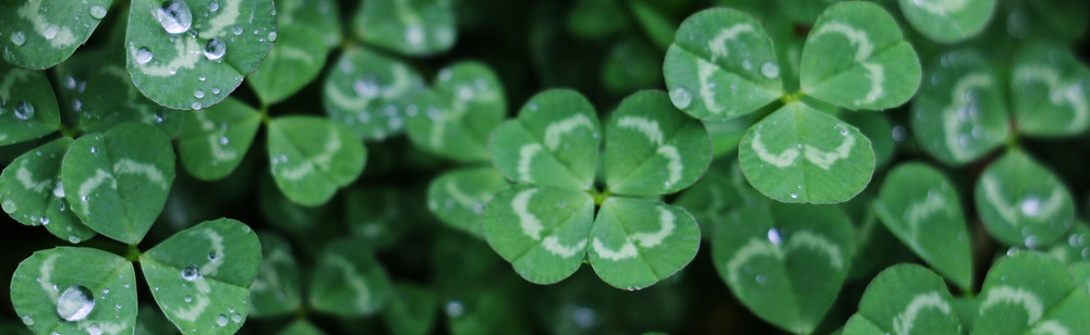 how to get a secret literary agent publishing publish your manuscript four leaved flowers lucky luck