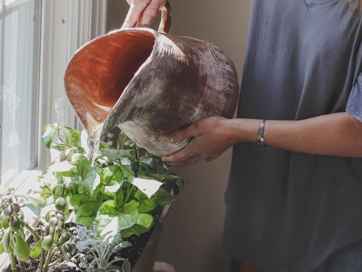 Nuestras plantas y el invierno; consejos para cuidarlas en esta época.