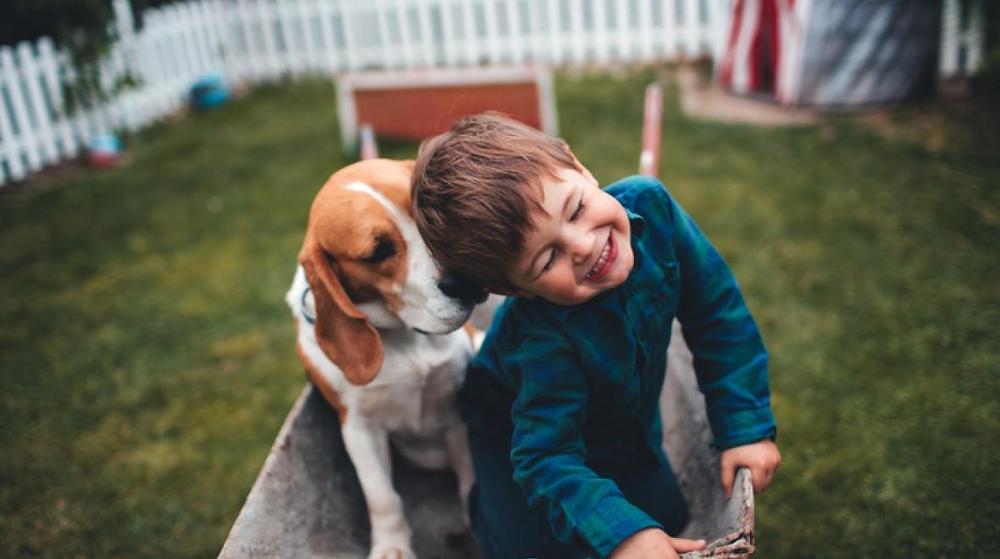 Дете ужива во дружбата со домашен миленик од расата бигл во дворот од домот