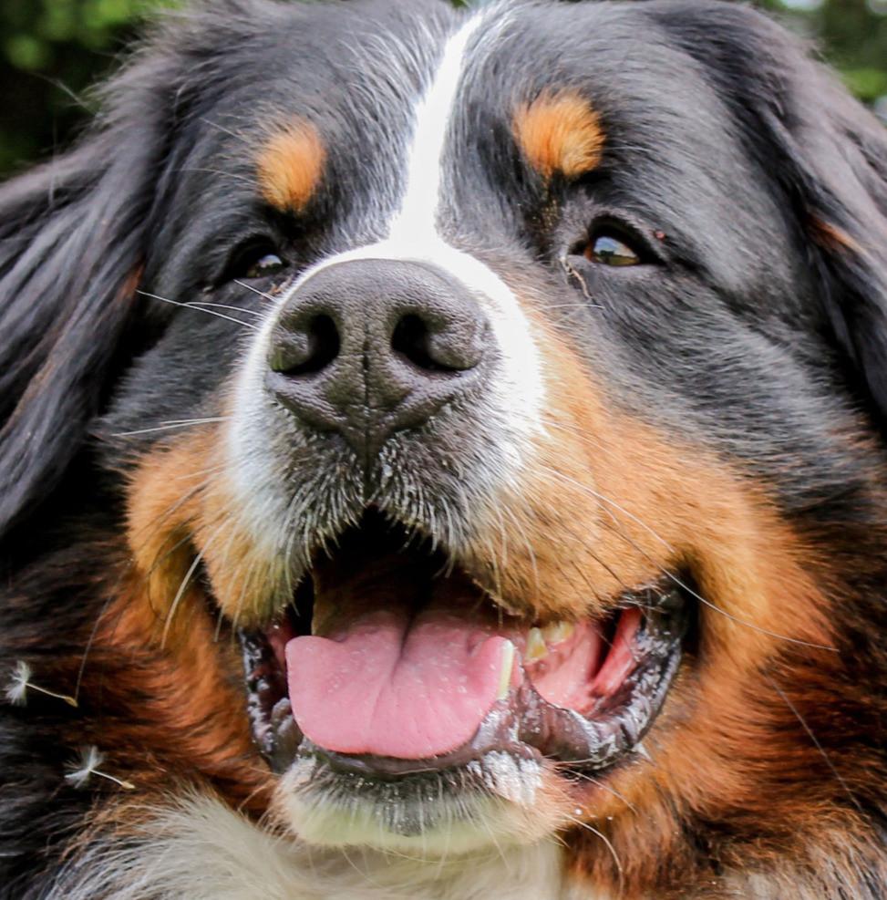 Archetypen Hunde extrovertierter Kundschafter Maja Nowak Hundetypen C. G. Jung