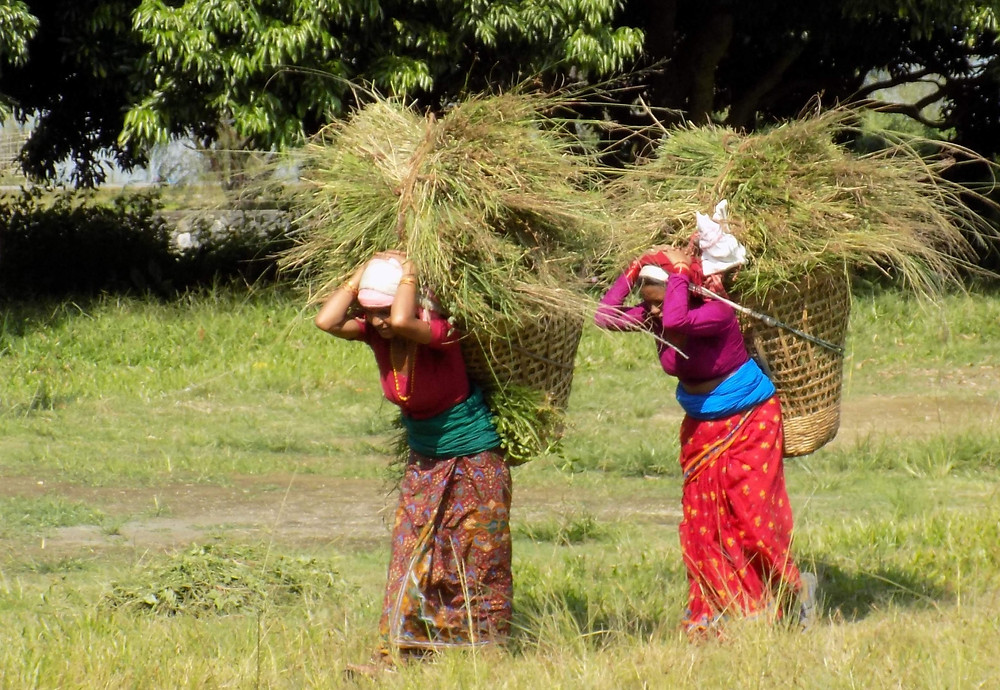 Agriculture Labor in Nepal