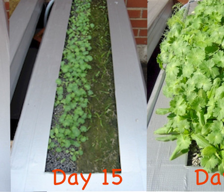 HydroBlox Hydroponic & Green Roof Results