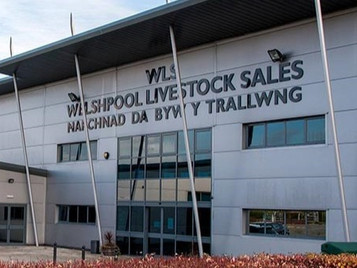 BWCS Sale Report - Welshpool 10th October