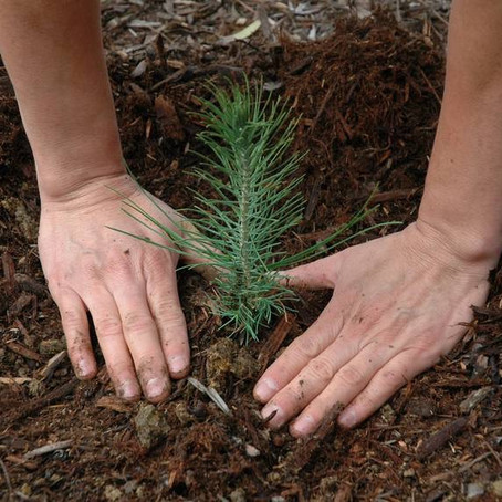 Students in the Philippines must plant 10 trees to graduate