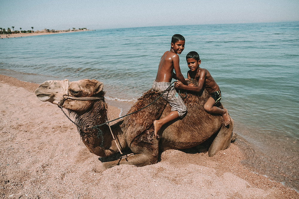 dahab egypt sinai red sea travel visit camel bedouin