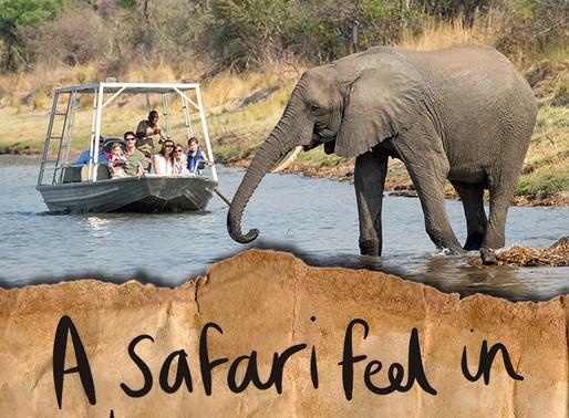 A safari feel in Livingstone