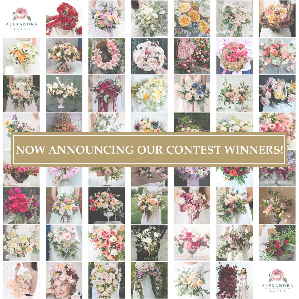 2019 Garden Rose Design Contest: Announcing the Winners!