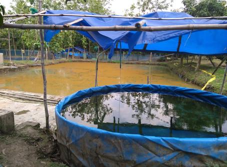Why Rainwater is Harmful to Biofloc tank?