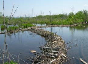 Le Chabot - La Protection des Rivières