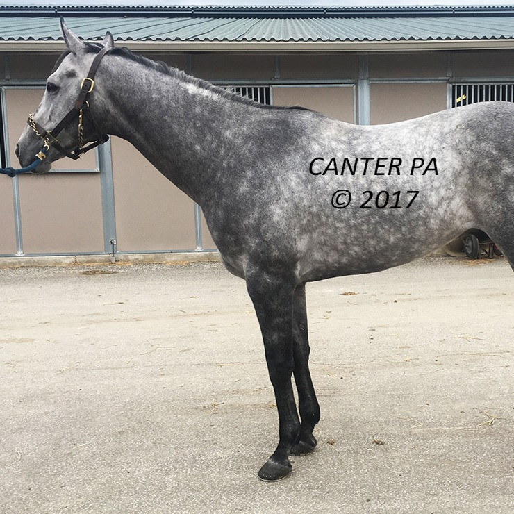 Canter USA and Life Equestrian