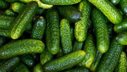 Celebrate National Pickle Day!