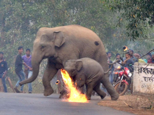 Elephants Firebombed