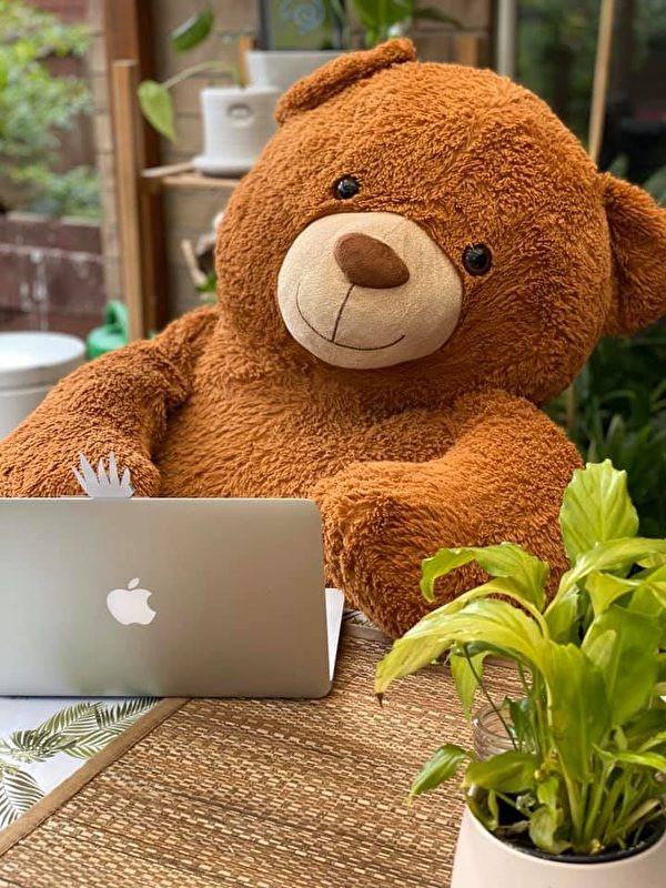 好些天沒見著泰迪熊了,聯繫下。