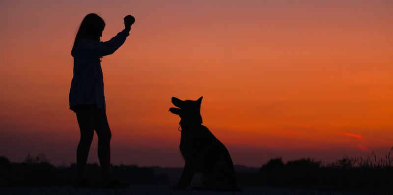 A healthy dog playing ball with its owner