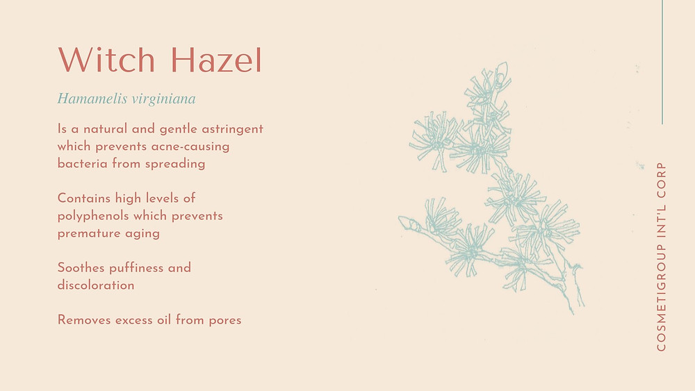 Skincare benefits of witch hazel