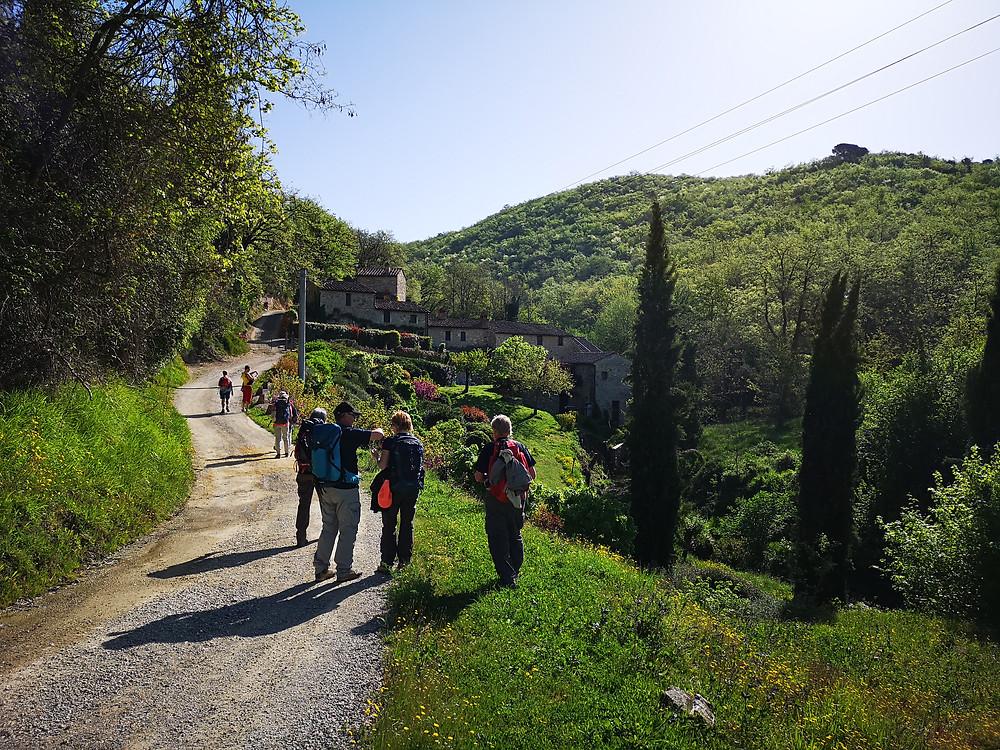 Via Romea del Chianti