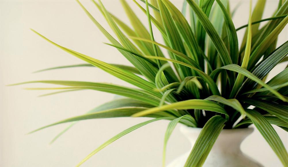 plante intérieur bureau