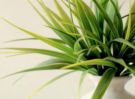Les plantes d'intérieur nous font du bien !