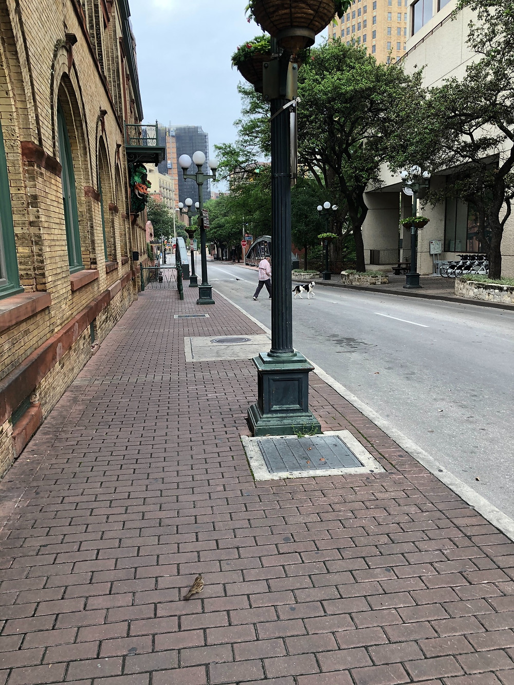 An empty downtown street in San Antonio with a single dog-walker crossing