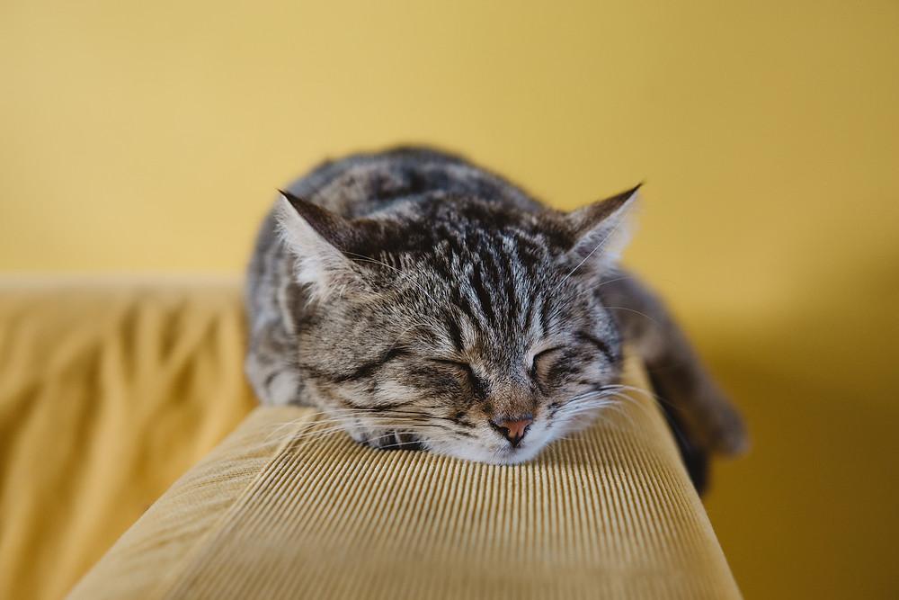 Un bon sommeil avec le Yoga