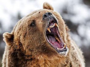 Croire aux fauves, rencontre d'une femme avec un ours
