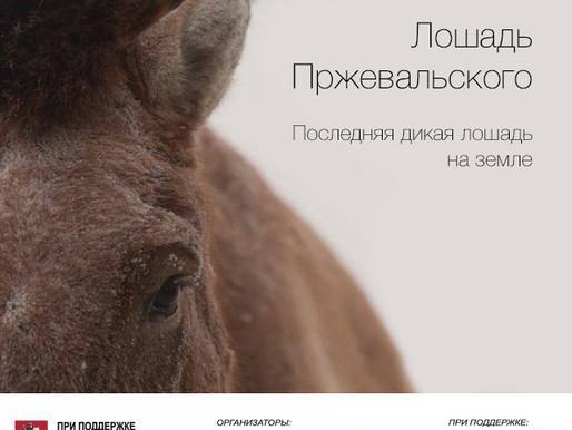 Фотовыставка: «Лошадь Пржевальского: последняя дикая лошадь на земле»
