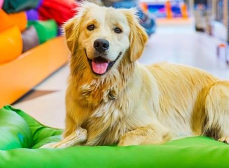 Seguro para pet shops oferece proteção para empresários e clientes