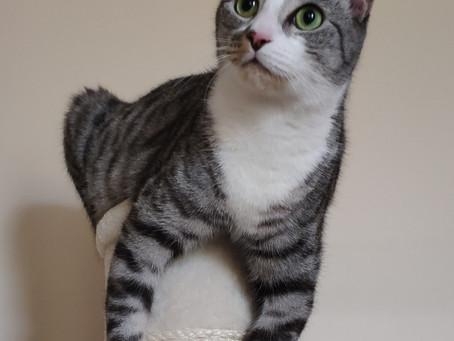 Cat Family Story #50: Yuki, Chewie, Jack and Archie