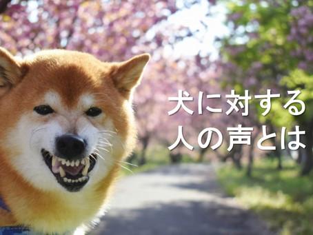 犬も人も約60Hz 愛犬に対する飼い主様の声の影響とは?